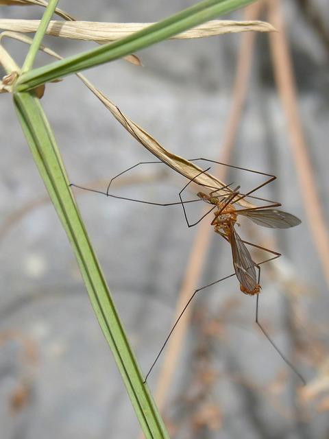 Co zdecydowanie warto wiedzieć na temat moskitier